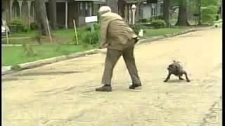 هجوم الكلاب على رجل كبير بالعمر