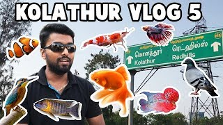 Kolathur Vlog 5 Full Video - Ornamental Fish Aquarium & Pets Market