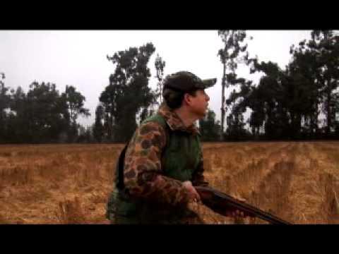 La caza de la tortola