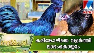Karinkozhi farming Nattupacha  | Manorama News