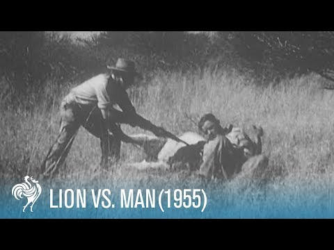 Lion v Man upsetting hunting scenes