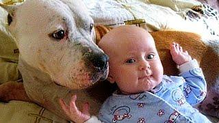 Pitbull Love Baby Compilation NEW