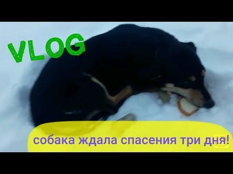 Xxx Mp4 VLOG Замерзающая собака ждала спасения трое суток ШОКОВАЯ история Жёсткое видео 3gp Sex