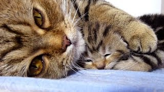 """Mom Cat talking to her Cute Meowing Kittens   Generation """"P"""""""