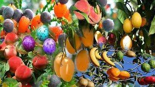 شجرة من الجنة بيها اكثر من 40 نوعا من الفاكهة