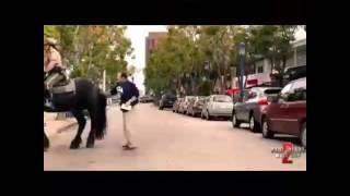 Coice do super cavalo