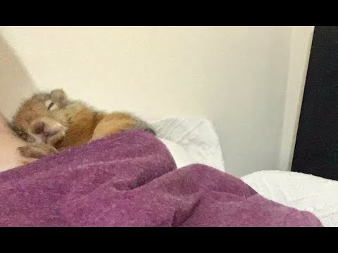 Sincap Bonibon un uyumak için seçtiği yer ve bu dünyadan değil dedirten masumluğu