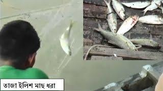Live Hilsa Fish catching in River।। পদ্মা নদীতে সরাসরি ইলিশ মাছ ধরা দেখুন।