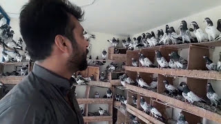 Awesome Birds Of Ustad Jamil Butt