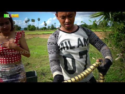 Amazing Brave Couple Catching snake on Rice field And Beautiful Catch Tree Snake Style 2017