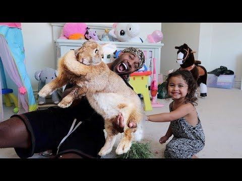 Xxx Mp4 SURPRISING THE ACE FAMILY WITH THE WORLD S BIGGEST RABBIT 3gp Sex
