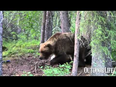Video Way Too Close to a Grizzly Pt. 2