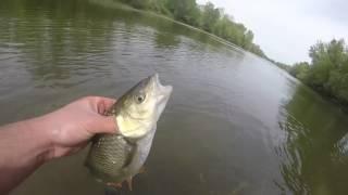Multi-session pêche en loire | GoPro HD