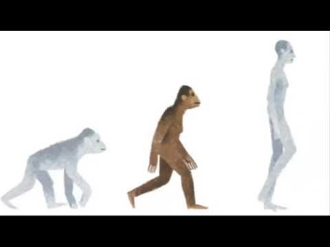 Xxx Mp4 Who Is Lucy The Australopithecus Google Doodle For The Discovery Of Lucy 3gp Sex