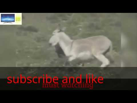 Xxx Mp4 Hot Hot Latest Funny Video Hot Girl With Donkey 3gp Sex