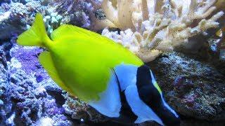 Das Aquarium Wilhelmshaven Seeaquarium Korallenriff Unterwasserwelt North Sea aquarium Wilhelmshaven