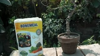 How to Use Bone Meal for Plants | How Much Bone Meal to Use | Organic Fertilizer (Urdu/hindi)