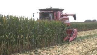 Case IH 8230 Axial-Flow Combine Harvesting Corn