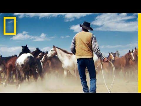 Xxx Mp4 Wrangling Wild Horses In The Mountains Of Montana Short Film Showcase 3gp Sex