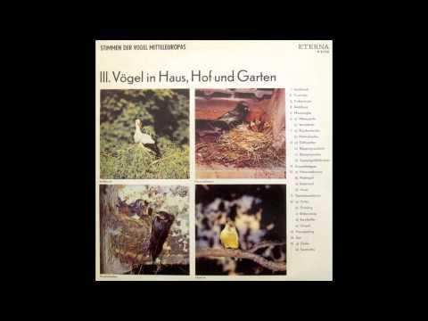 Stimmen der Vögel Mitteleuropas III. Vögel in Haus Hof und Garten