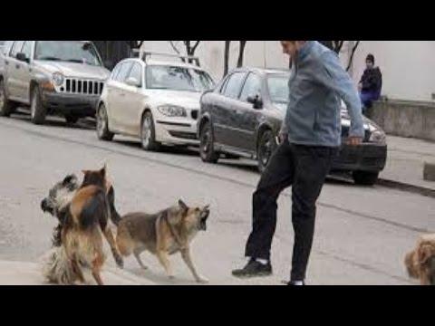 Ataque de animales salvajes a seres humanos parte 4 Wild animals attack humans Part 4