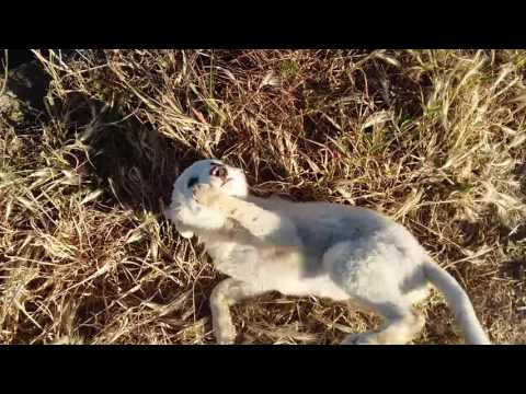 homeless dog i find in the fields reaction