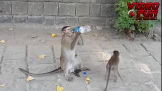 001   Drunk Monkey Fall in Love Mujhe Peene Ka Shauk Nahi   720p