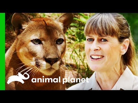 Terri Irwin Visits A Wildlife Sanctuary Very Close To Her Heart Crikey It s The Irwins