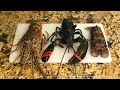 LOBSTER TASTE TEST! How to Cook Lobster! Which one is the best?!?!?!?
