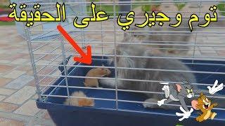 قط مع فار في مكان واحد شوفو وش صار!!!