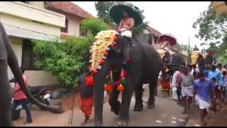 Elephant com