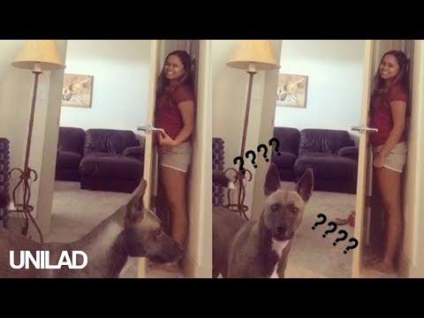 Dog Sucks At Hide And Seek | UNILAD