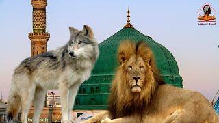 تعرف على الزمان الذي يهجر فية الناس المسجد النبوي وتدخلة السباع