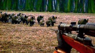 Wild boar hunting - Serbia - Vojvodina -  Lov divlje svinje - Srbija 2016 HD