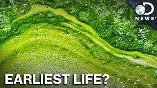 What The Crap Is Algae Anyway?