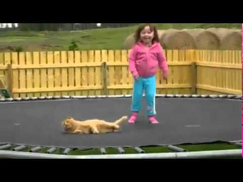 Cats don't like trampolines
