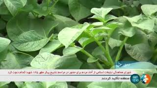 Iran Potato tissue planting & Potato harvest, Ardabil province كاشت سيب زميني به روش كشت بافت اردبيل