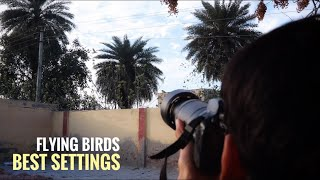 Flying Birds Photography Sharp Focus With Back Button On Nikon Camera Wild Photography Tips In Hindi