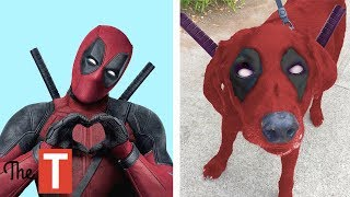 15 Superheroes In Real Life As Dogs