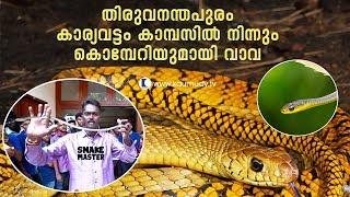 Wow! Vava suresh rescues Bronzeback Tree Snake from Trivandrum Karyavattom Campus   Snake Master