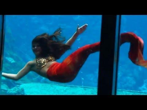 See live mermaids daily at weeki wachee springs state park for Mako mermaids dailymotion