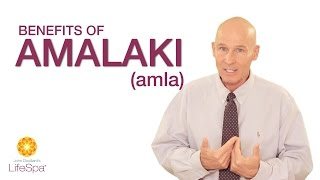 Benefits of Amalaki (amla berry) | John Douillard's LifeSpa