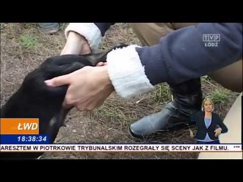 Nielegalna hodowla psów pod Sieradzem ŁWD 13.10.2014