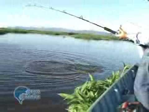 Pesca Dinâmica Pescaria de Pacu Dourado e Cachara no Pantanal