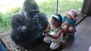 MUST SEE!!!!! SWEET GORILLA JELANI LOVES AND TELLS PEOPLE TO SWIPE TO NEXT PICTURE ON PHONE