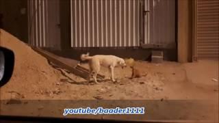 قطه تتحدى كلب / Cat vs dog
