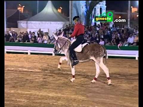 COMPLETO Caramelo el burro que se cree caballo en la Pará de Gines 2012