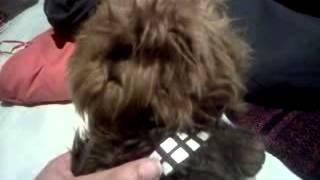 El saludo de chewbacca