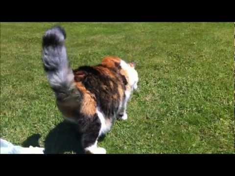 gertrude's cat osrs