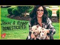 Download Video Download FOSTERING A PIG WITH THE MATHEWS | Jenni & Roger: Domesticated | Awestruck 3GP MP4 FLV